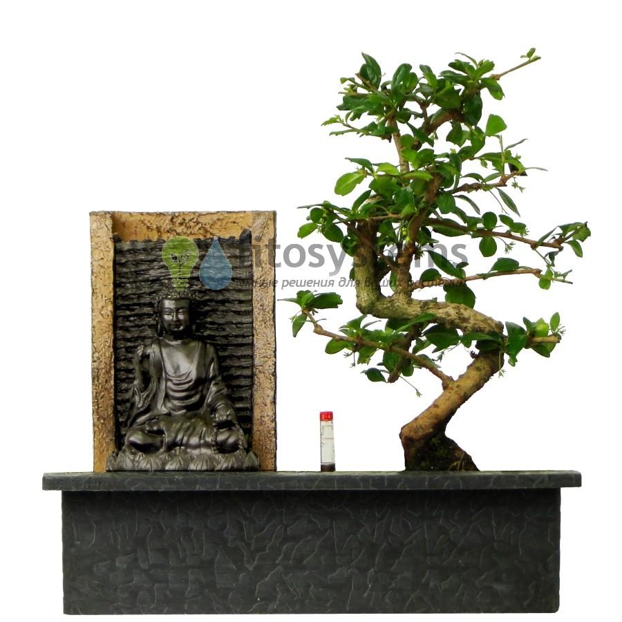 Бонсай Кармона «Водопад Будды» 34 см