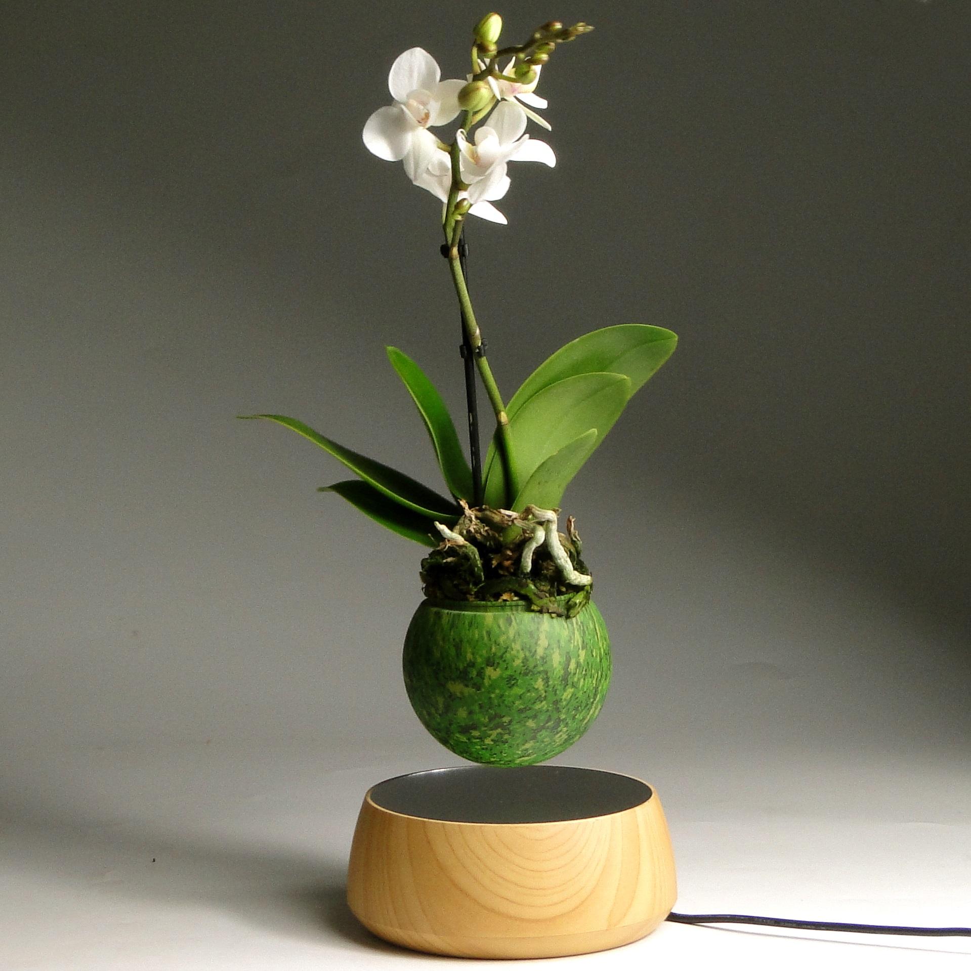 Левитирующая мини орхидея