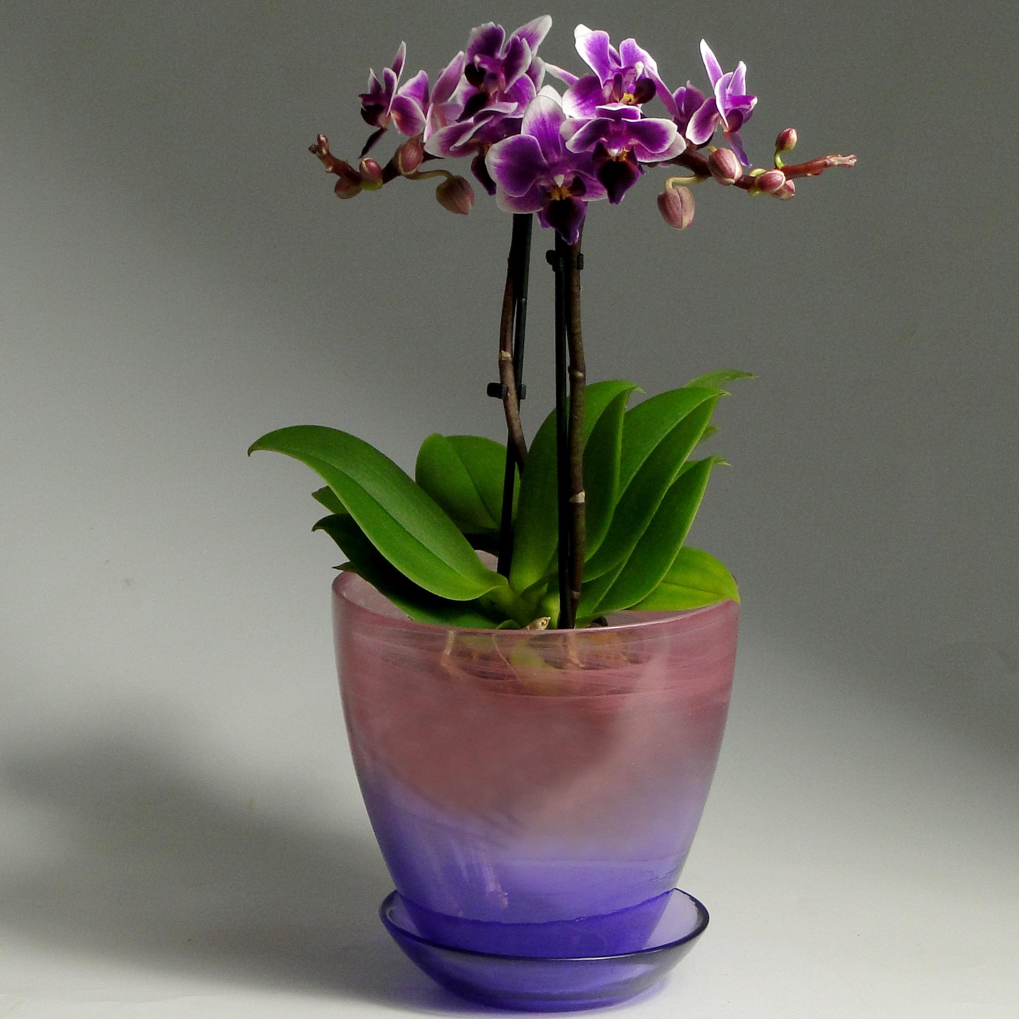 Орхидеи мини в стеклянном кашпо