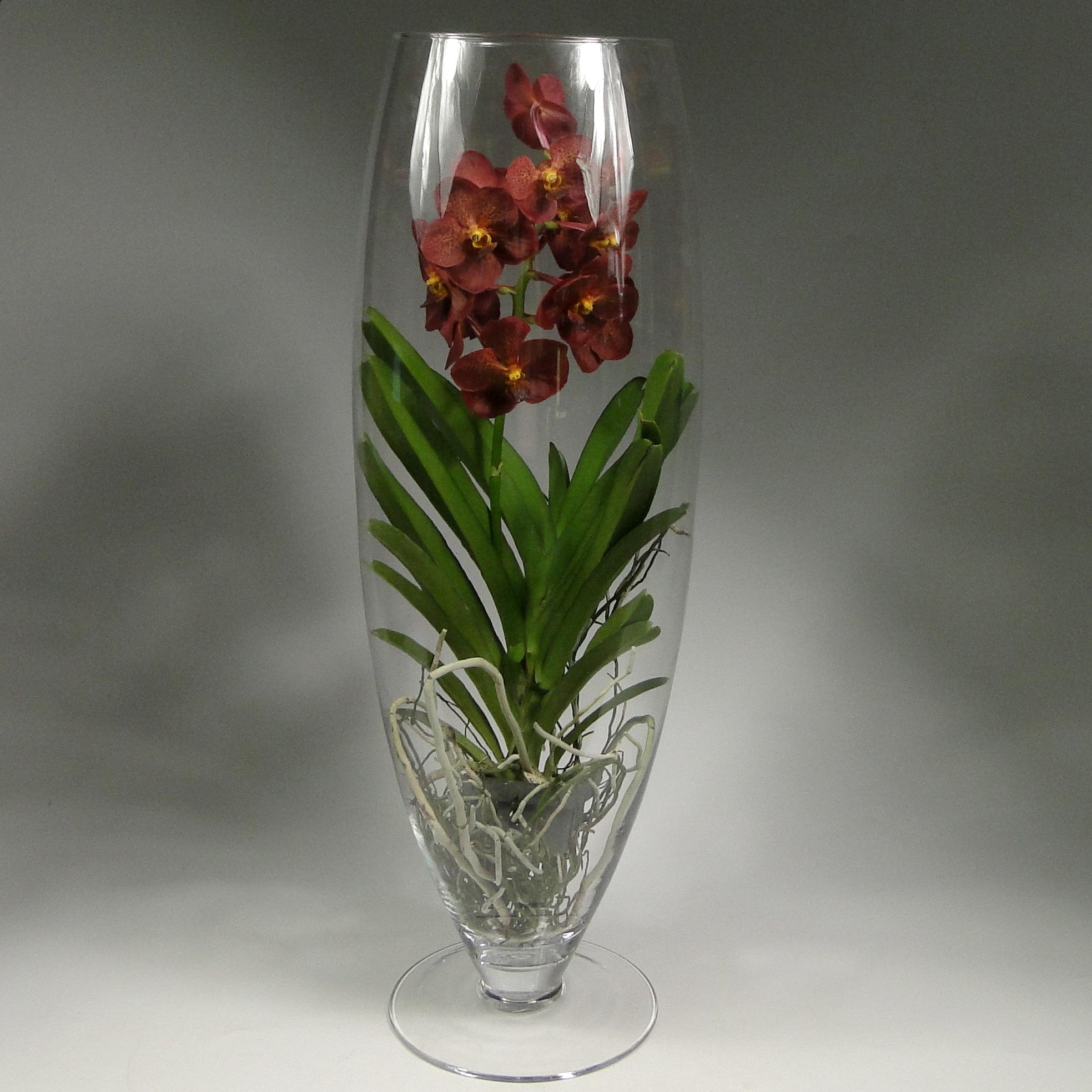 Орхидея ванда красная в бокале шампань