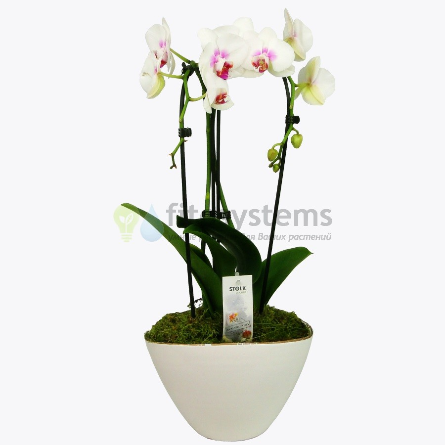 Орхидея фаленопсис в керамике Виенн