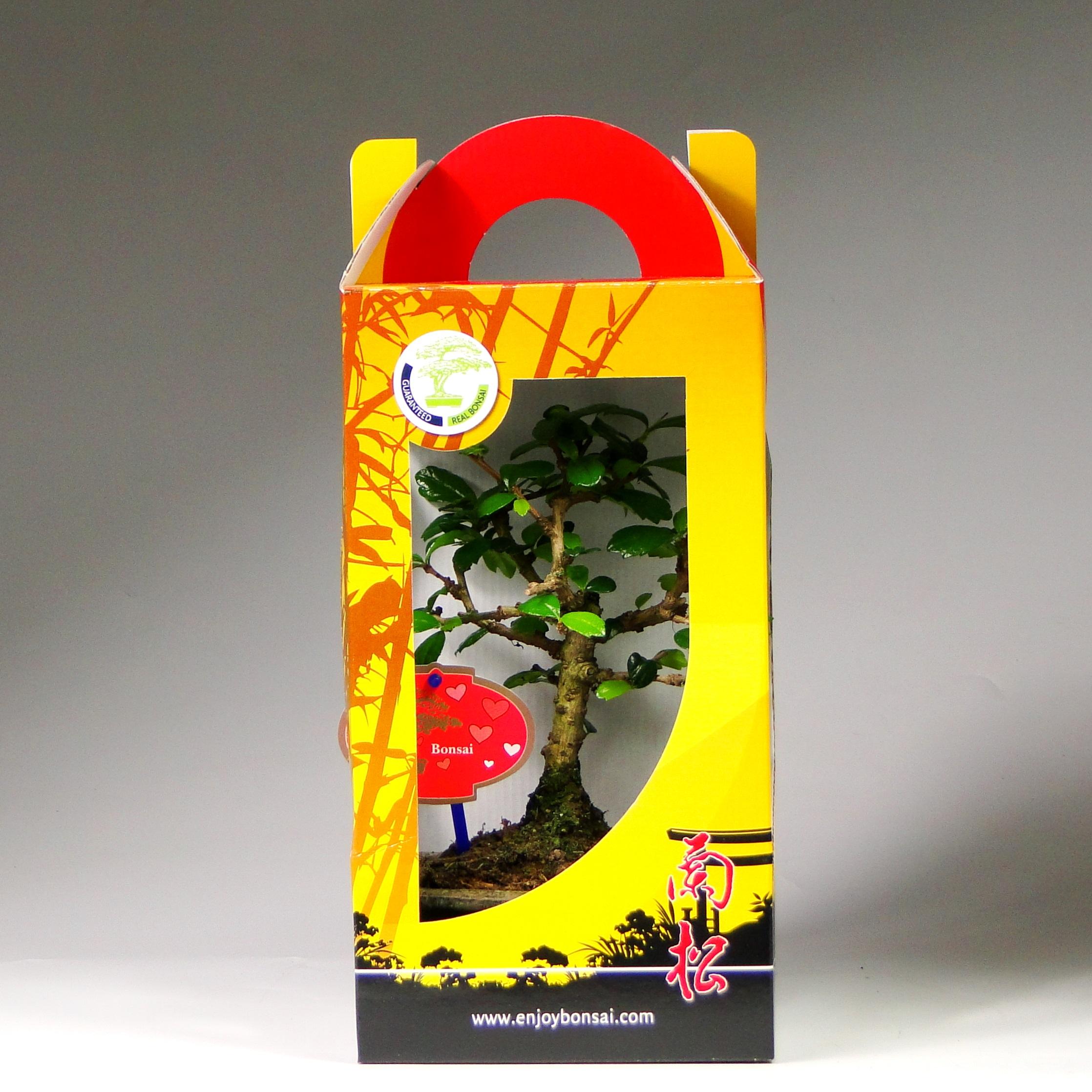 Бонсай мини в подарочной упаковке