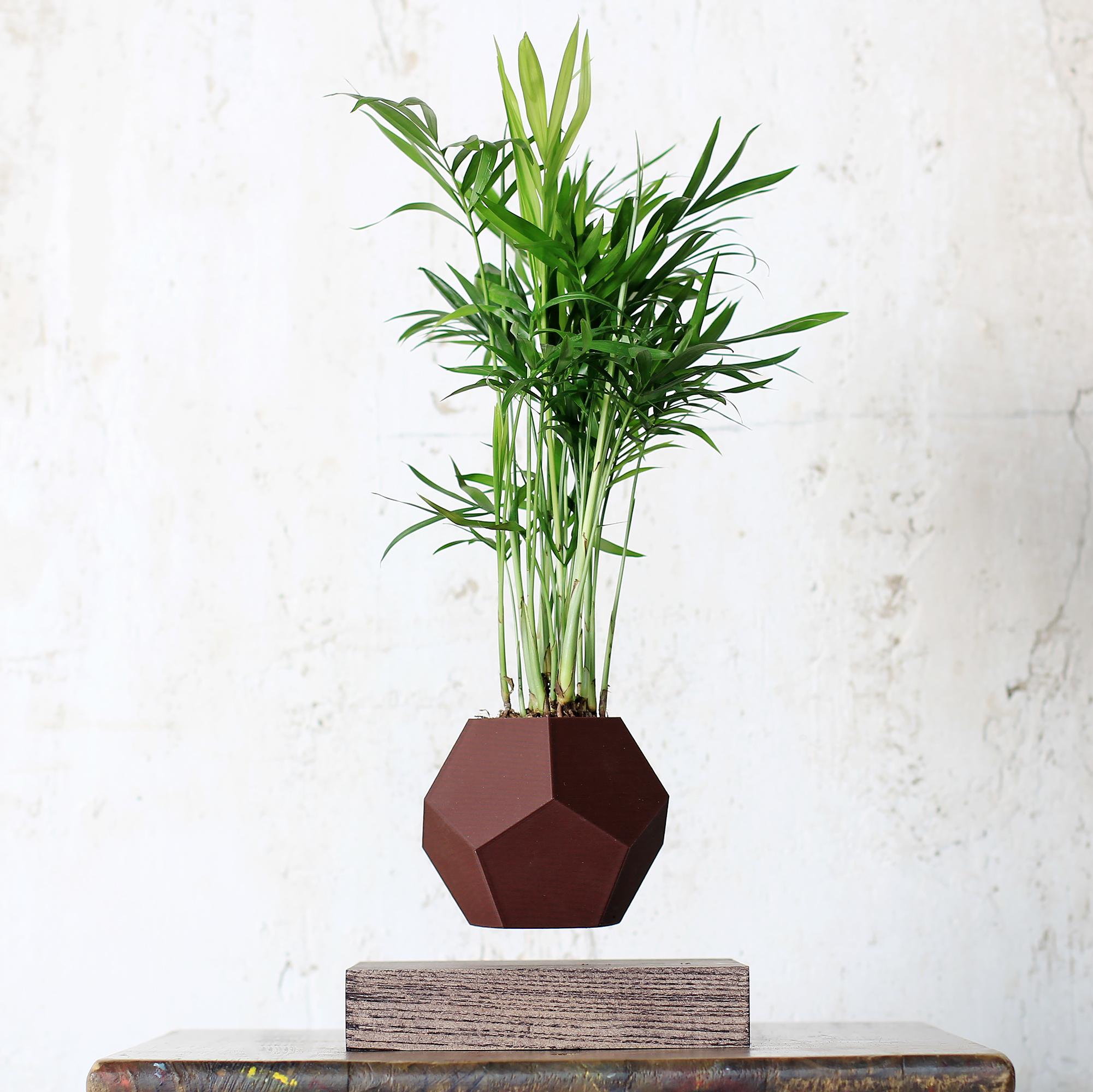 Левитирующее растение в темном кашпо