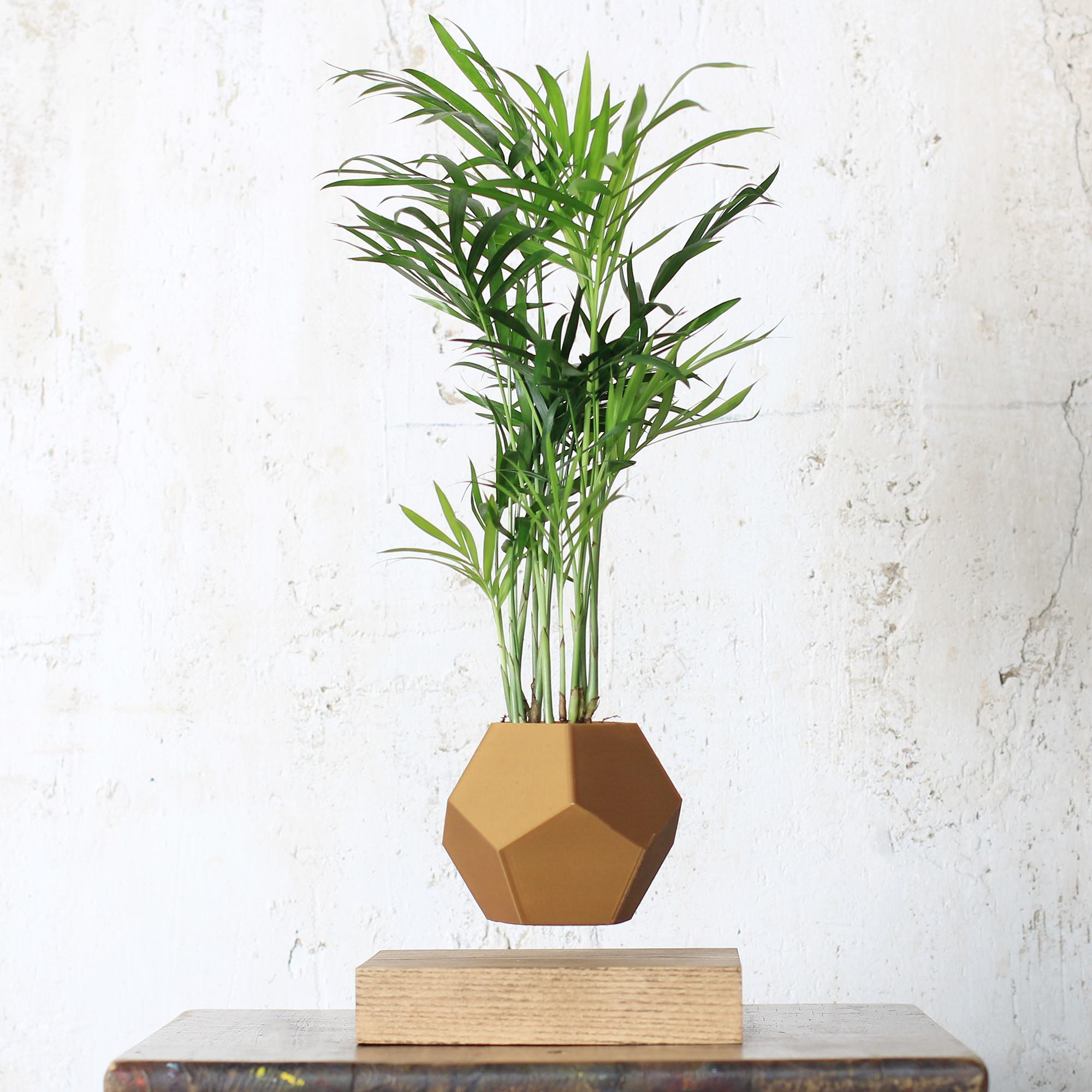 Левитирующее растение в светлом кашпо