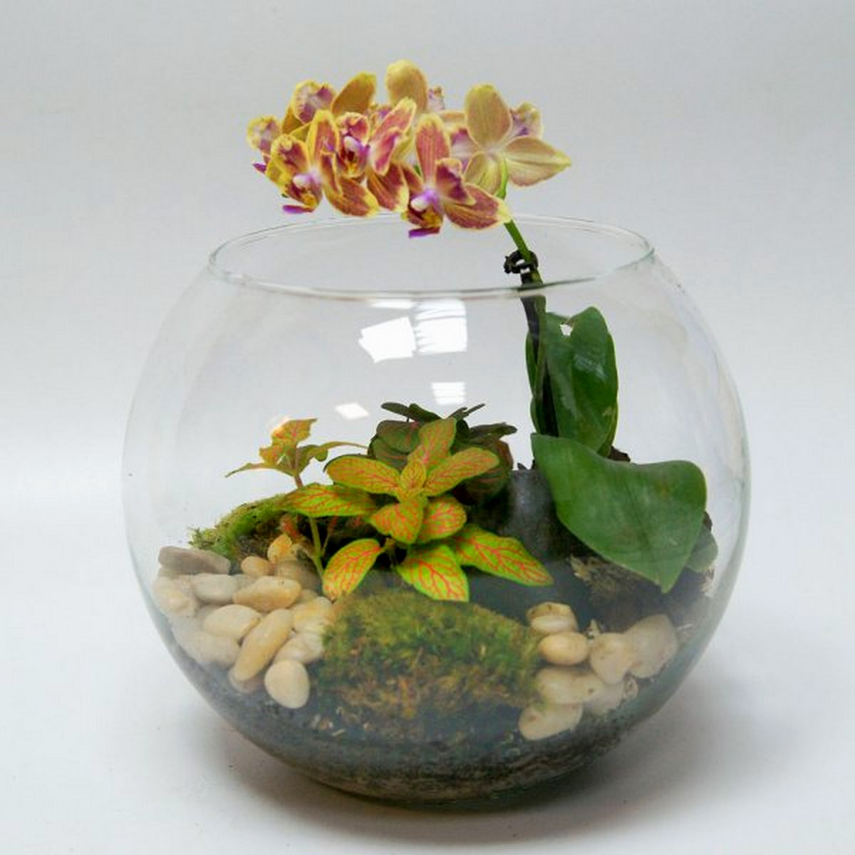 """Флорариум """"Жемчужина орхидей"""""""