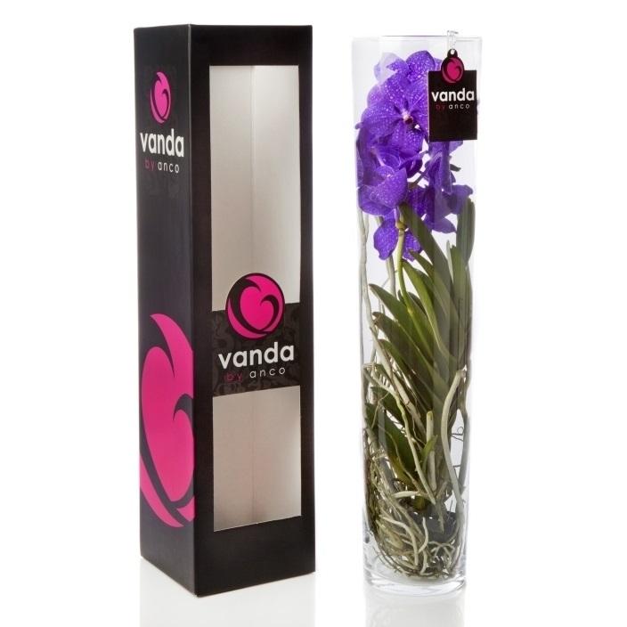 Орхидея Ванда в стекле Мишель