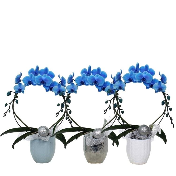 Фаленопсис синий (голубой) в керамике