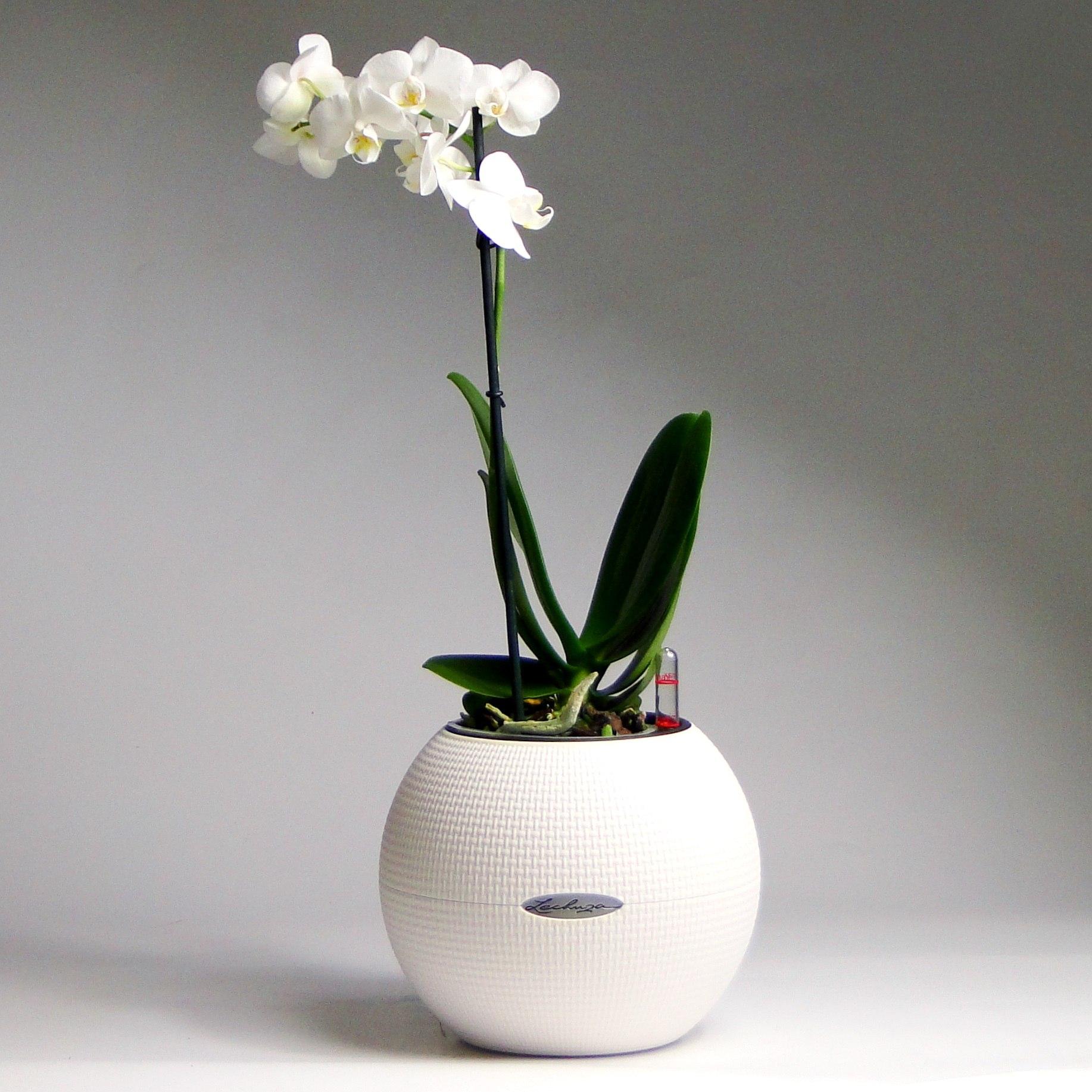 Белая орхидея в Lechuza Puro Color