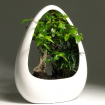 Bonsai_sageretia_keramic_fool_moon3